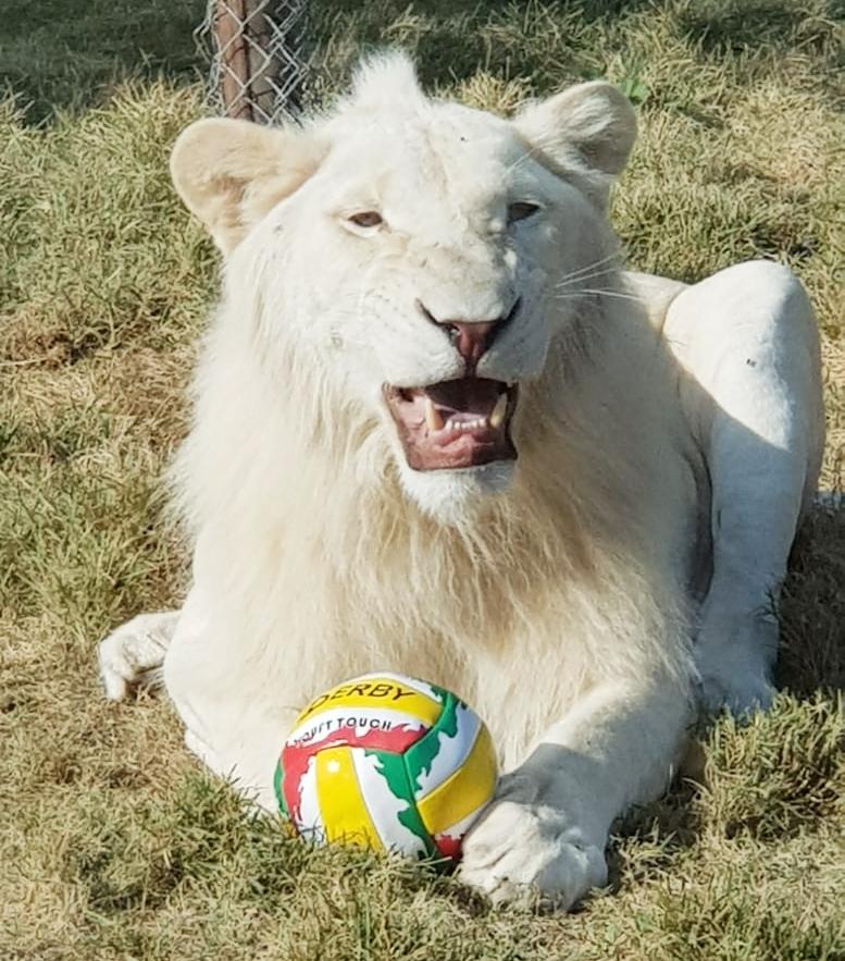 נגב ZOO ממחזר צעצועים וכדורי משחק ישנים לטובת בעלי החיים בגן