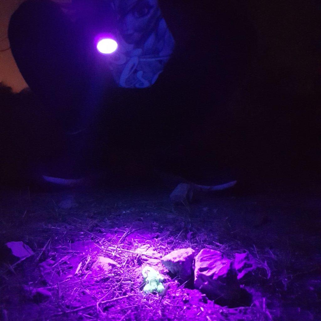 סיורי לילה חווייתיים בנגב zoo